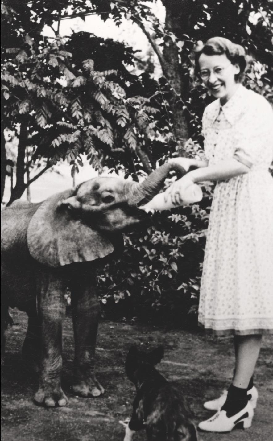 Suzy Elefant