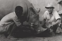 Nashornfütterung