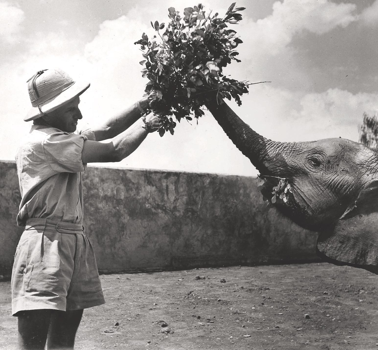 Zoologe Fritz Ernst füttert einen Elefanten. Foto: V. Ernst, Tanzania, 1950er-Jahre, Privatbesitz