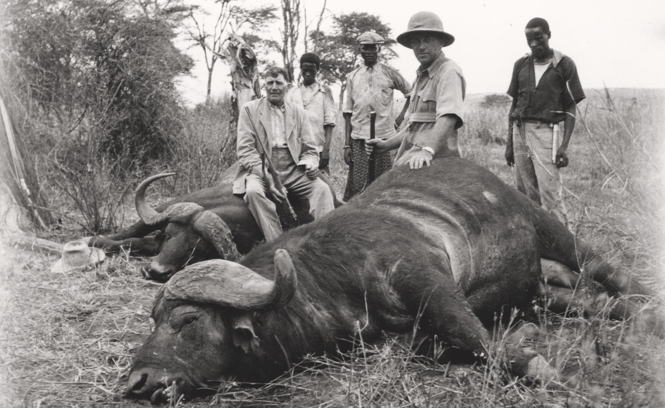 Künzler (2. v. r.) und eine Jagdpartie mit erlegten Büffeln. Tanzania, 1930er-Jahre, Staatsarchiv Thurgau