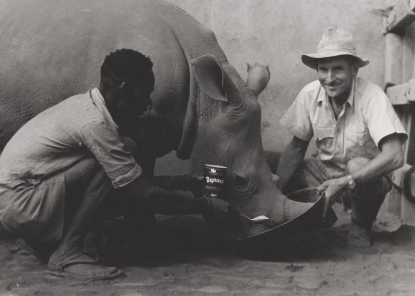 Zoologe Ernst und ein Arbeiter füttern ein Nashorn mit Hefe der Firma Dyna aus Fribourg. Foto: Verena Ernst, Tanzania, 1950er-Jahre, Privatbesitz